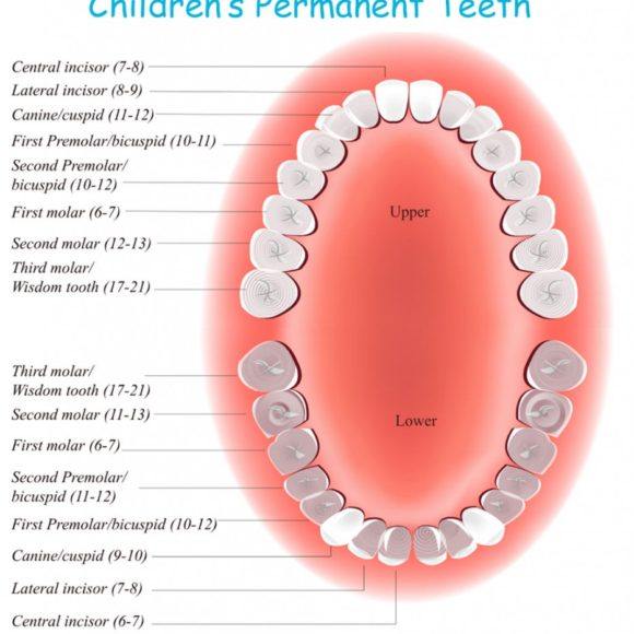 Learn about the permanent teeth eruption in children